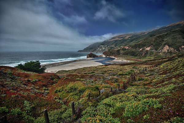 Highway Nr. 1 Flower Power - California by Andreas Freund